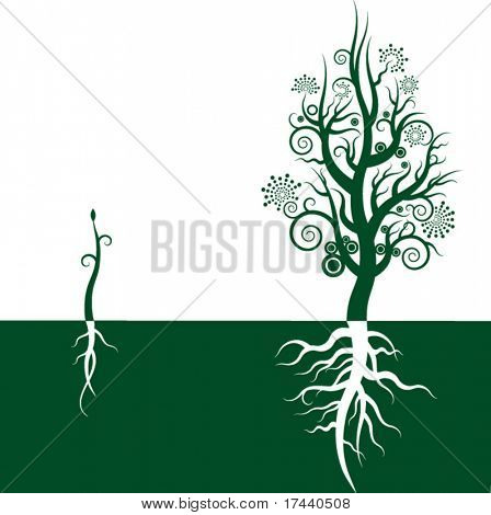 Symbolical growth of a tree