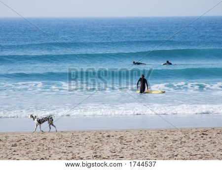 Surfers And Dalmatian
