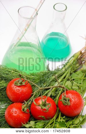 GVO Food Konzept