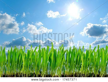 Frame from a green grass isolated on white background