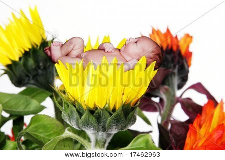 Infant Child Cradled in Fantasy Yellow Sunflower