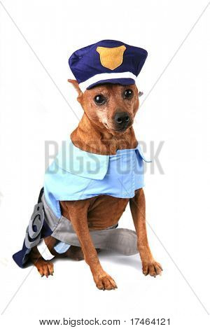 Funny Dog Dressed as a Police Officer