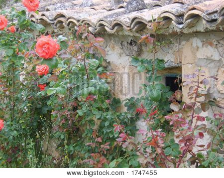 Roses On Wall