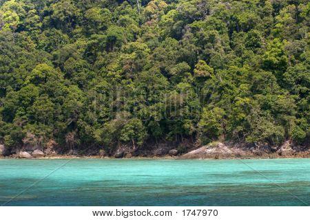 dichte tropische Küste