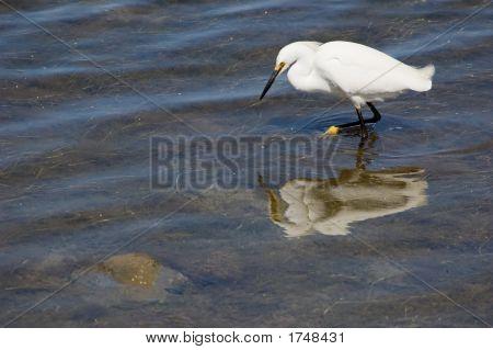 Shallow Water Fishing