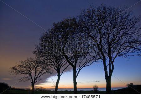 Silueta de un árbol con la puesta de sol detrás de