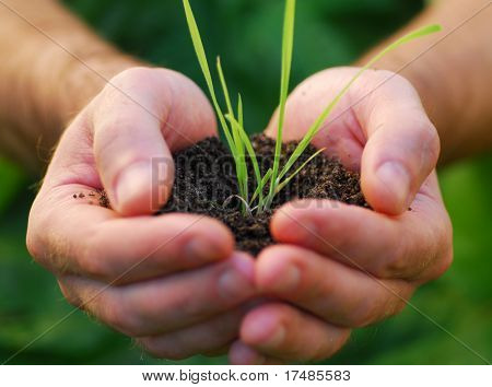 Hand holding plant seed