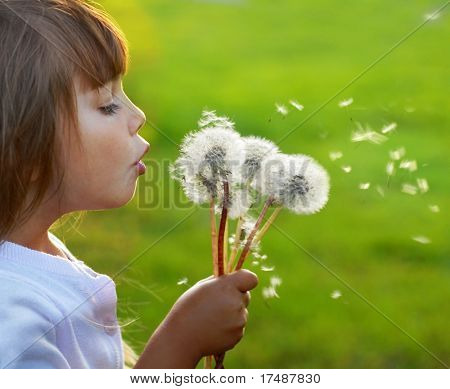 Fun with dandelions
