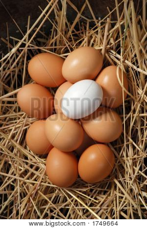 Brown Eggs With White Egg 28