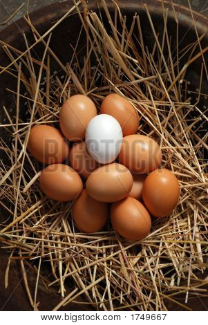 White Egg With Brown Eggs 33