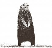 picture of groundhog day  - marmot - JPG