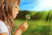 stock photo of dandelion  - Summer fun - JPG