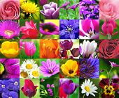 stock photo of beautiful flower  - Colorful Floral Collage  - JPG