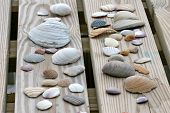foto of crustations  - Sea Shells laying on a picnic table - JPG