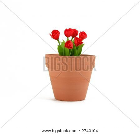 Small Tulips In Terracotta Flowerpot
