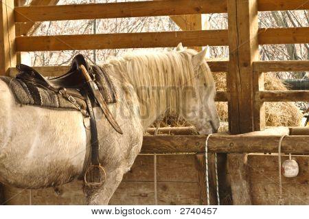 Eating Horse