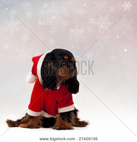 Marmaduke the black and tan Cavalier wears a Santa Suit against snowflake background