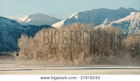 Bald Eagles On The Ground And On Snow Covered Branches.alaska