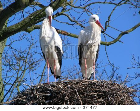 Stork Couple #2