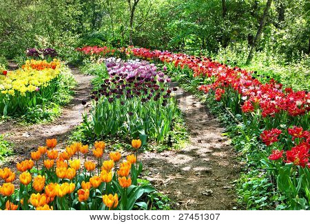 Botanical Garden Among Tulips In Moscow