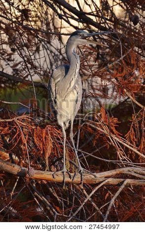 blue heron mimicry