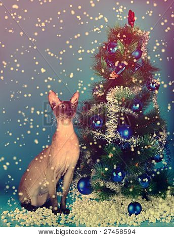 cat on the background of the Christmas Tree