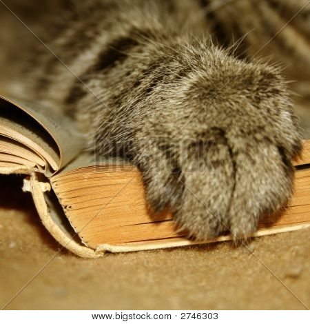 Paw Of A Cat On A Book