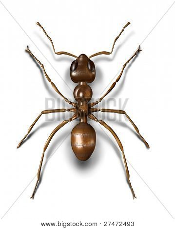 3d modeled and rendered brown ant