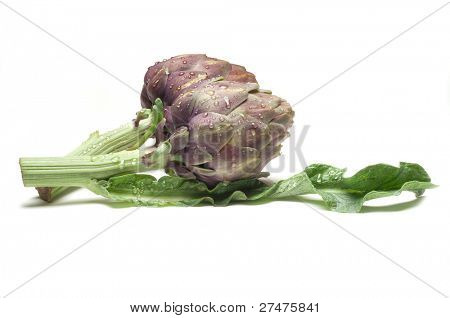 artichoke on wihite