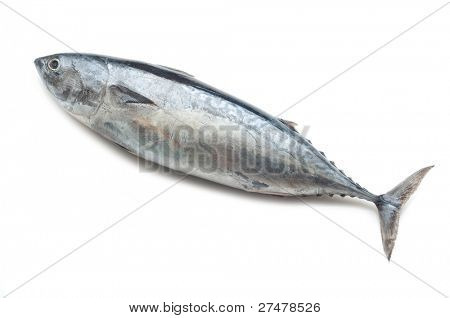 tuna on white