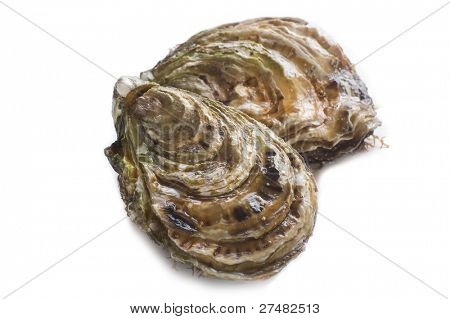 two oyster isolated on white