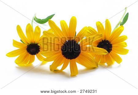 Yellow Flowers  Isolated On White