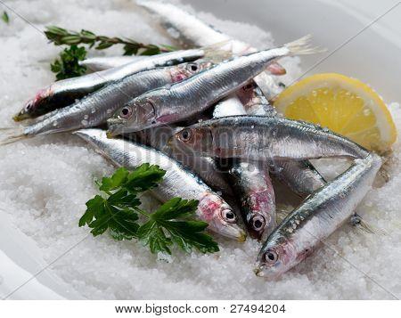 group of fresh sardines over salt