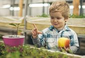 Future. Concept Of Healthy Youth With Good Future. Happy Little Boy Hold Fresh Apple In Greenhouse A poster