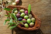stock photo of olive branch  - basket with olive branch - JPG