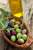 foto of olive trees  - basket with olive branch and oil - JPG