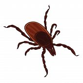Tick Isolated On White Background. Tick Parasite. Sketch Of Tick. Vector Illustration poster
