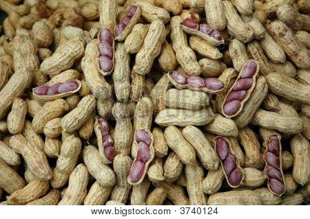 Many Groundnut Ripe