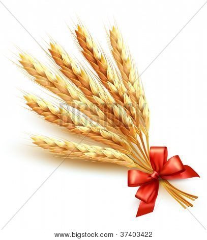 Ears of wheat with red bow. Vector illustration.