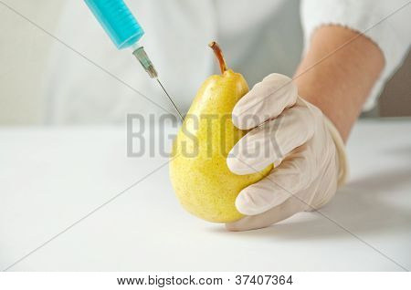 Sweet Pear, Genetic Engineering