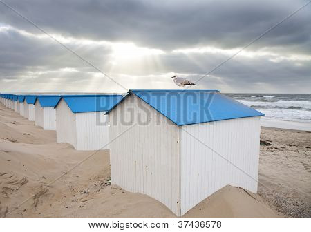 Dutch Little Houses On Beach With Seagull In De Koog Texel, The Netherlands
