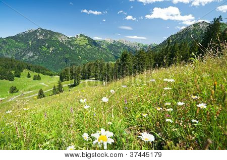 Alpine Meadow In Germany