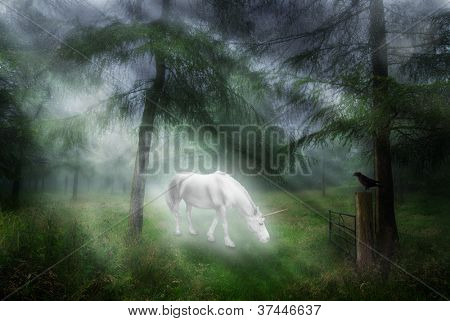 Unicorn in a magical forest setting with jackdaw watching