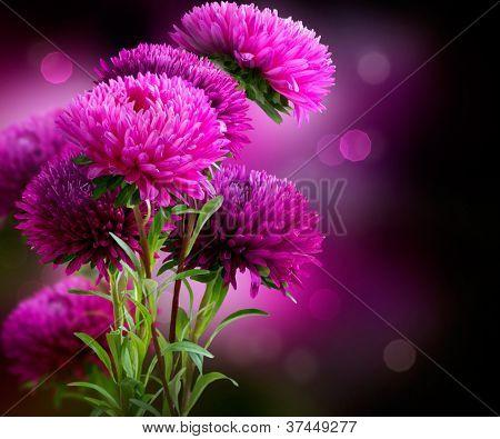 Aster Autumn Flowers Art Design over Black Background