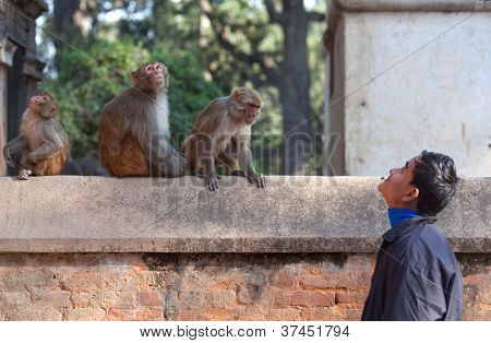 Young Nepalese man and monkey