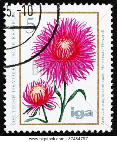 Postage stamp GDR 1975 China Aster, Flower