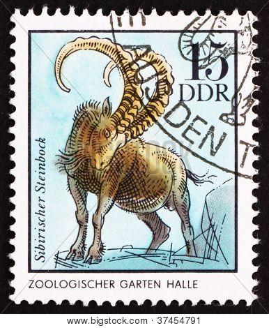 Postage stamp GDR 1975 Siberian Chamois