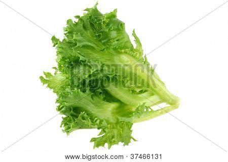 Closeup photo of Fresh organic hydroponic Frille Iceberg Lettuce, isolated on white background