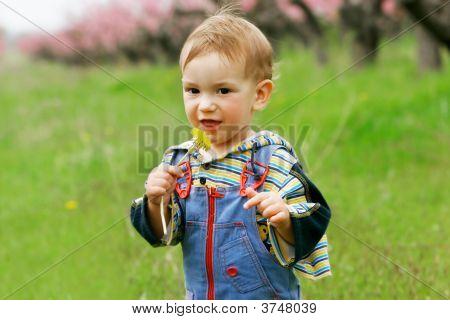 Baby Boy With Dandelion Portrait