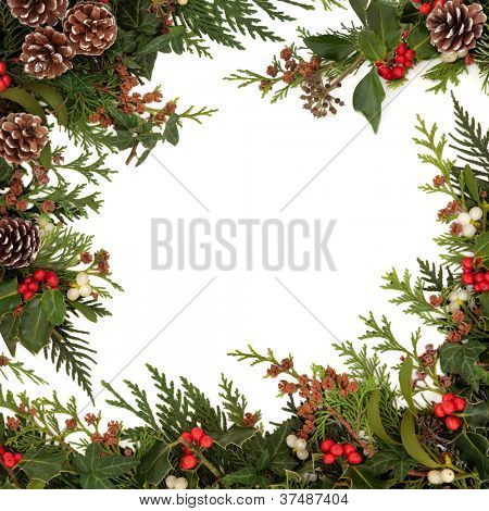 Winter and christmas  traditional border of holly, ivy, mistletoe and cedar cypress leaf sprigs with pine cones over white background.